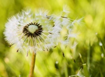 Coronavirus: I rischi per chi soffre di allergie ai pollini e asma